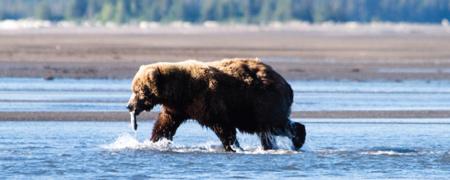 bear viewing tours